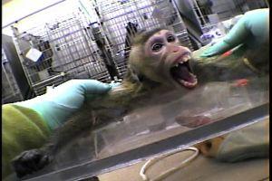 AstraZeneca bedrev tidigare djurförsök i Lund men pröjsar nu Huntingdon Life Sciences för jubbet